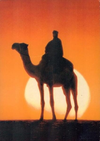 Camel mild. Echt Camel Vorderseite
