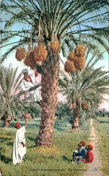 Palmiers dattiers-La Cueillette Vorderseite
