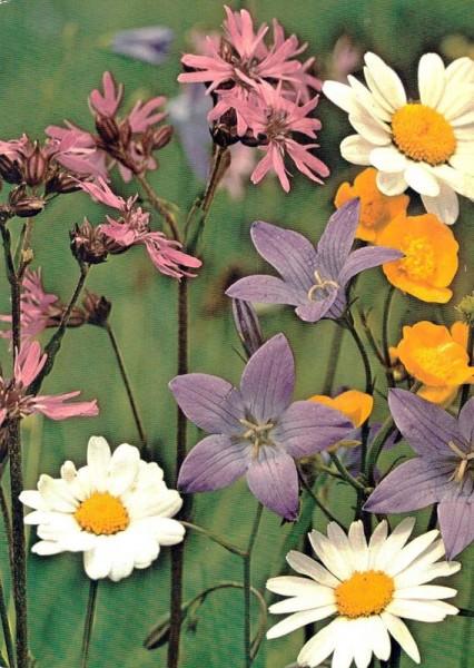 Feldblumen Vorderseite