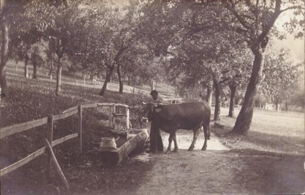 Bauern mit Kuh