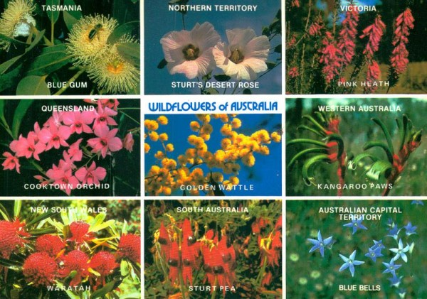 Wildflowers of Australia Vorderseite