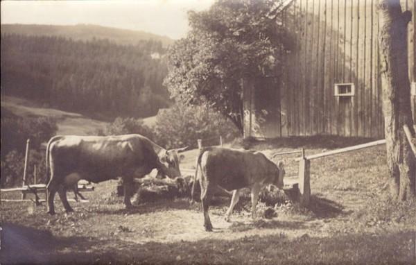 Zwei Kühe am Brunnen
