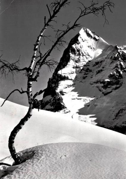 Bergbirke und Eiger Vorderseite
