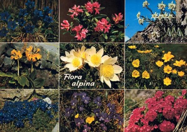 Flora alpina Vorderseite