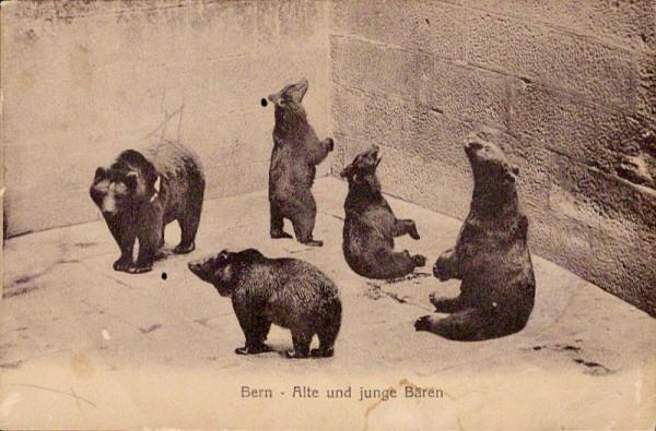 Bern - Alte und junge Bären