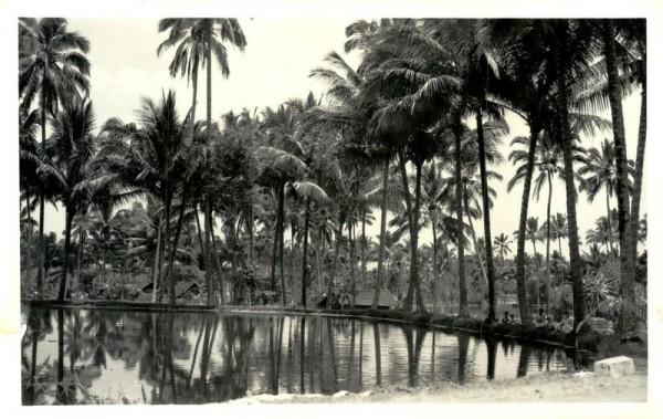 Palmen Vorderseite