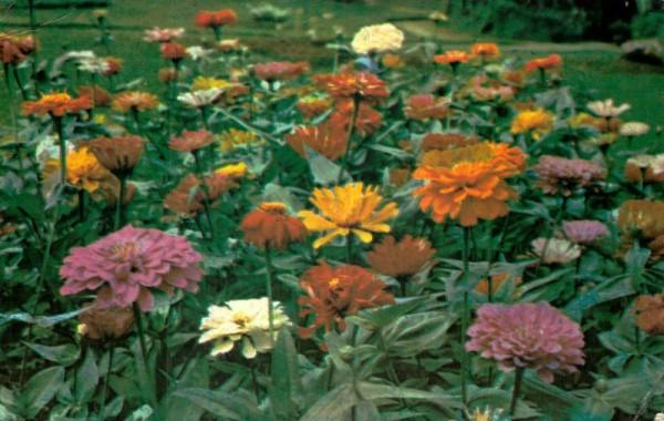 Sri Lanka, Peradeniya Botanical Gardens Vorderseite