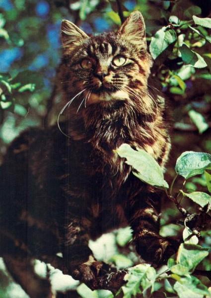 Tiger-Katze im Baum Vorderseite