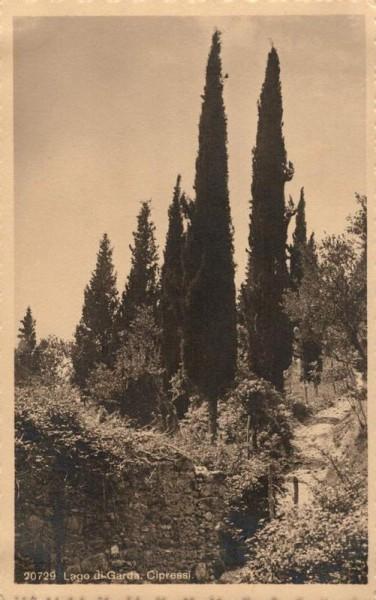 Lago di Garda. Cipressi Vorderseite