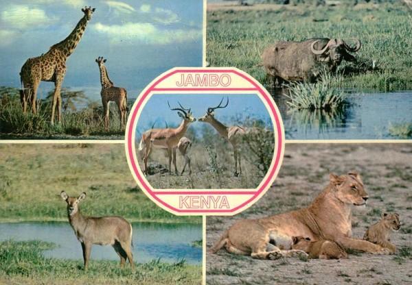 Wildnis Kenyas Vorderseite