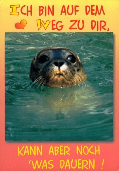 Seehund beim baden Vorderseite