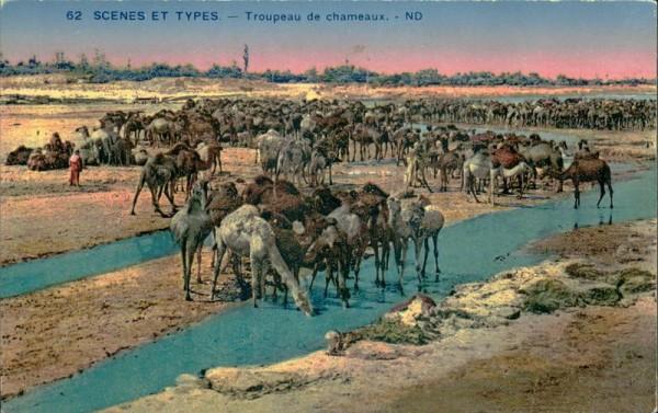 Troupeau de chameaux Vorderseite