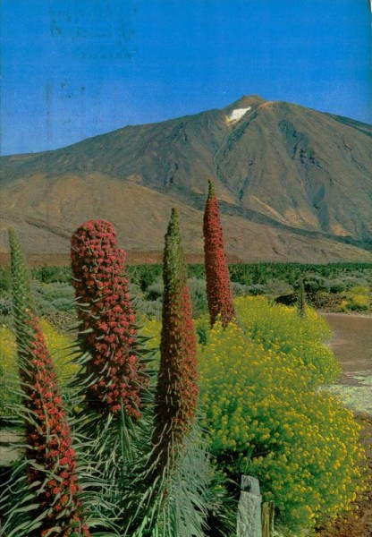 Tenerife Vorderseite