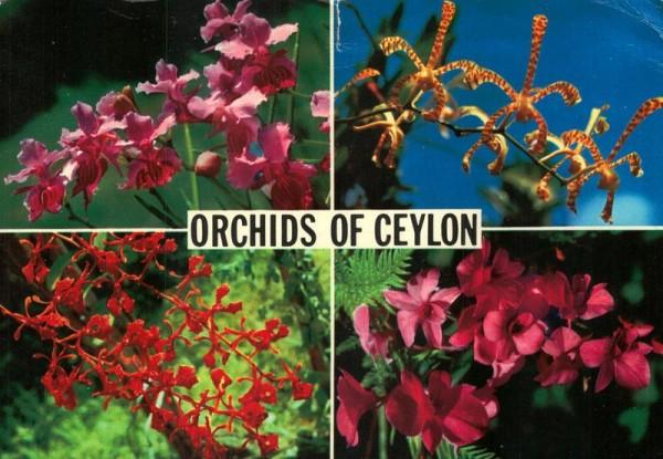 Orchids of Ceylon Vorderseite